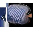 Redtail Butterflyfish ##STADE## - look 2