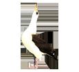 Albatross ##STADE## - look 16019
