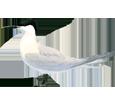 Sandwich Tern ##STADE## - look 5