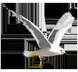 Gull ##STADE## - look 16021