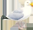 Gull ##STADE## - look 5