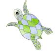 Loggerhead Sea Turtle ##STADE## - look 16026
