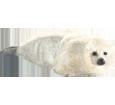 Seal ##STADE## - look 32