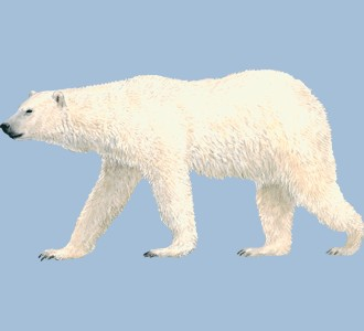 Take in a polar bear species marine animal