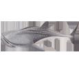 Whale-shark ##STADE## - look 71