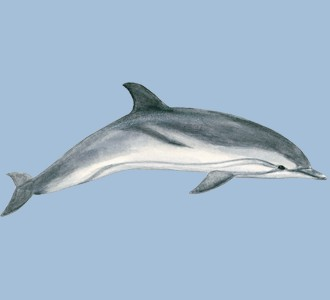 Take in a dolphin species marine animal