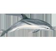 Dolphin ##STADE## - look 1