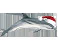 Dolphin ##STADE## - look 117