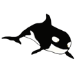 Orca Whale ##STADE## - look 16023