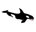 Orca Whale ##STADE## - look 185