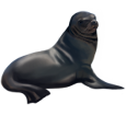 Sea lion ##STADE## - look 13